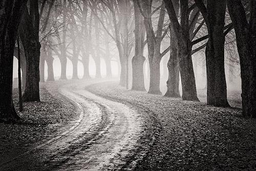 barren path
